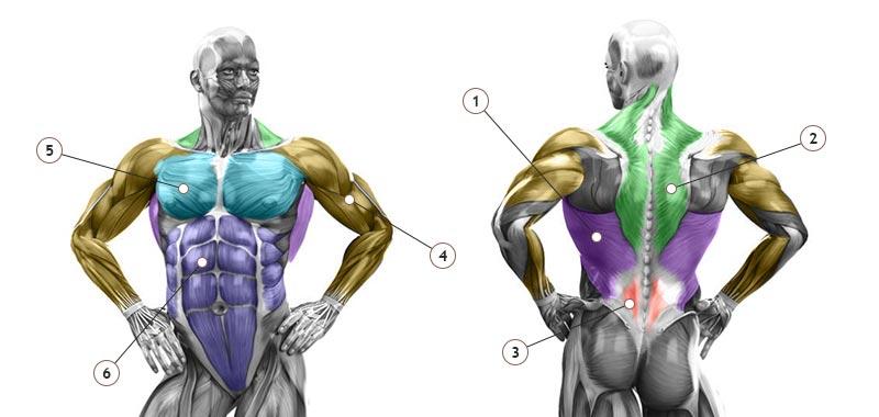 Мускулы тяги на спину